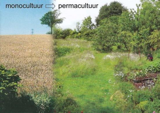Deze complilatie van twee foto's (uit Permaculture Magazine) en zijn daadwerkelijk hetzelfde landschap, met enkele jaren ertussen. Bron: Permaculture Magazine, nummer 62 www.permaculture-magazine.co.uk